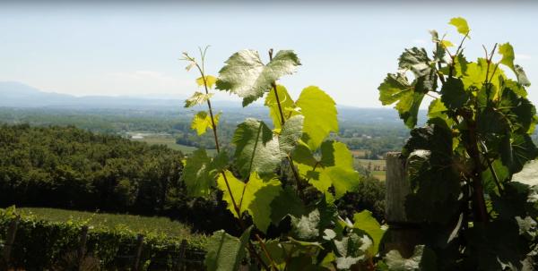 Episode 3 : Une terroir ouvert à la biodiversité - Les Vins du bugey