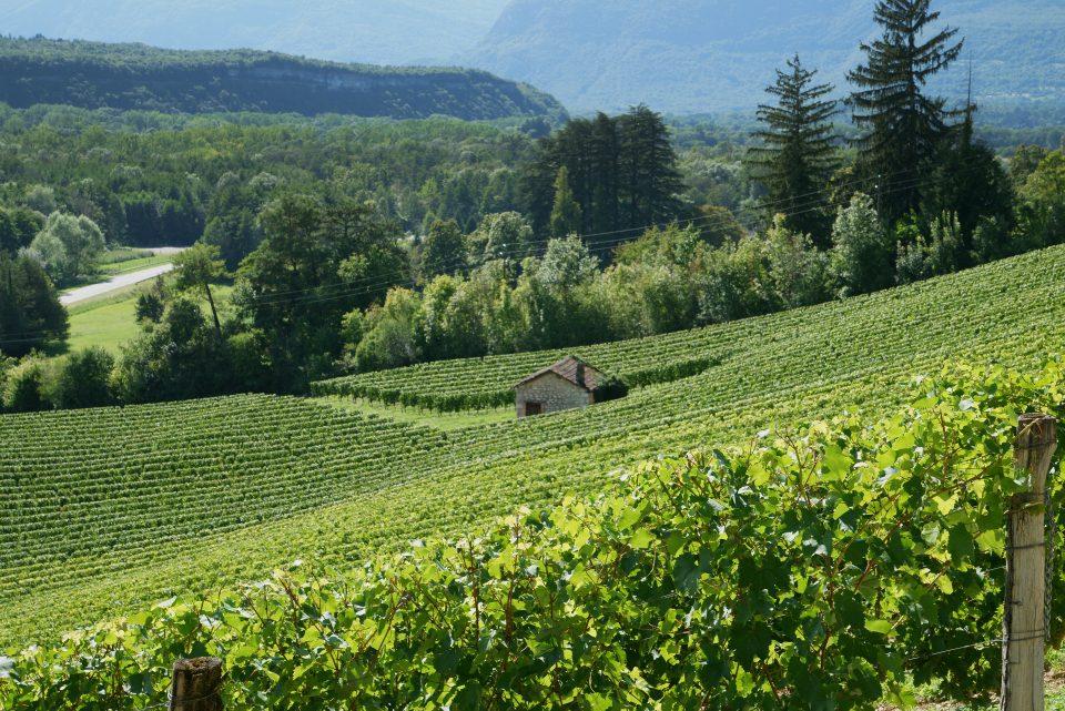 Domaine Sylvain Bois - Aoc Bugey - Sur les pentes du Grand Colombier